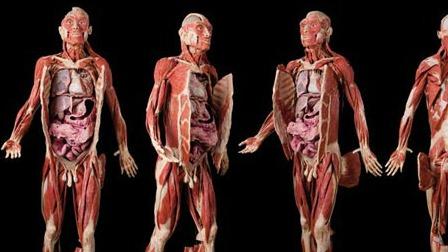 človeški organi